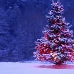 Mensagem de Natal de S.ª Exa. … Eu mesmo! – João Cerveira
