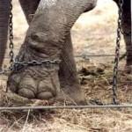 Eu não vou ao circo! Não dou a ganhar a quem maltrata os animais! – Sandra Castro