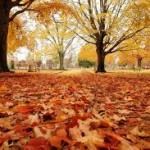 Tempo para apanhar a folha