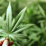A polémica das drogas leves